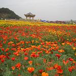 中国有机生活公园