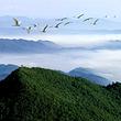 阳岭国家森林公园