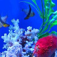 新澳海底世界单馆