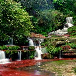 赤水桫椤国家级自然保护区