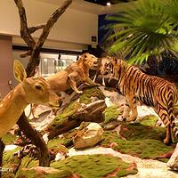 福建土楼自然博物馆