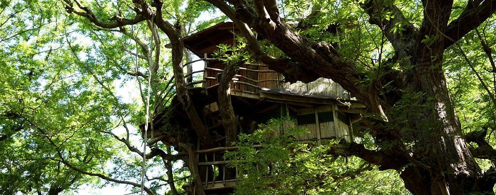 可观可住的树屋