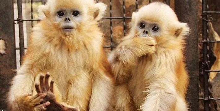 济南动物园门票,济南动物园门票预订