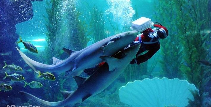 壁纸 动物 海底 海底世界 海洋馆 水族馆 鱼 鱼类 710_360