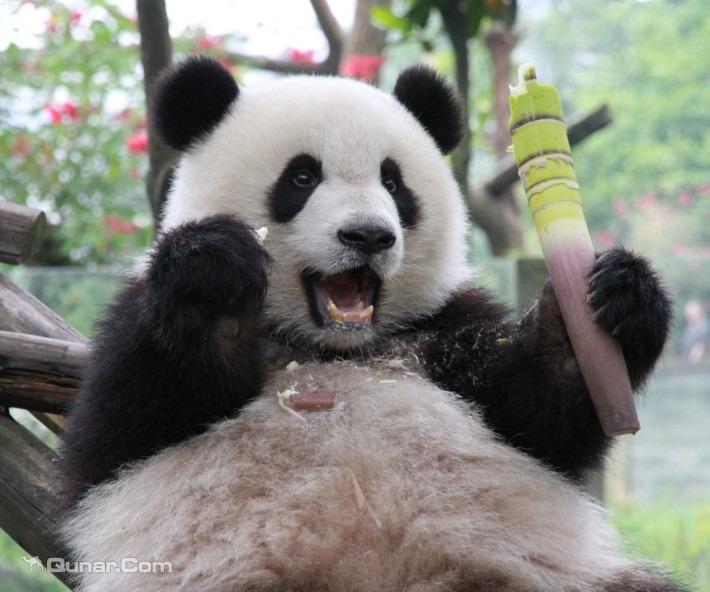 辟有动物馆20多处,饲养动物150余种,1200余只,其中珍稀动物有大熊猫
