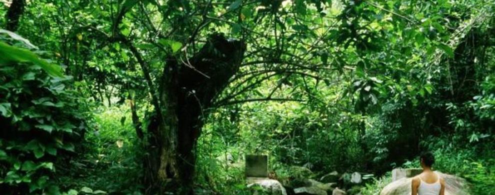 "雨林深处""野""温泉"