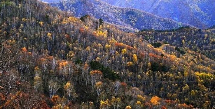 白草洼国家森林公园