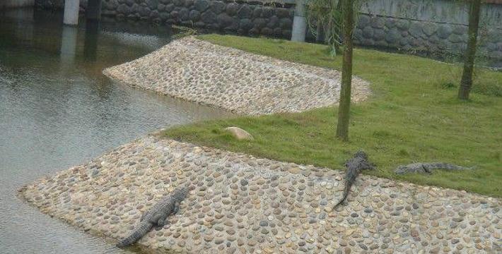长沙生态动物园门票,长沙生态动物园门票预订