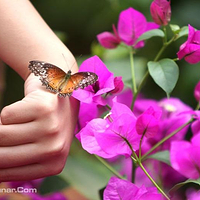 世界蝴蝶生态园
