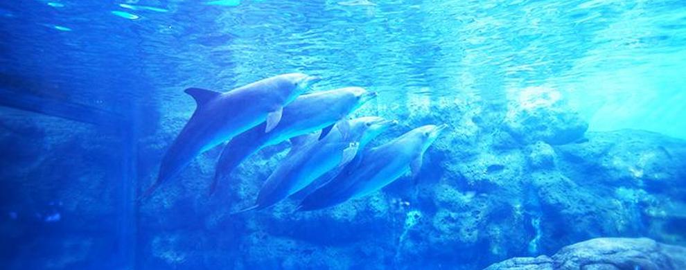 浪漫海豚湾