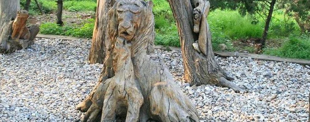 板栗树根雕群