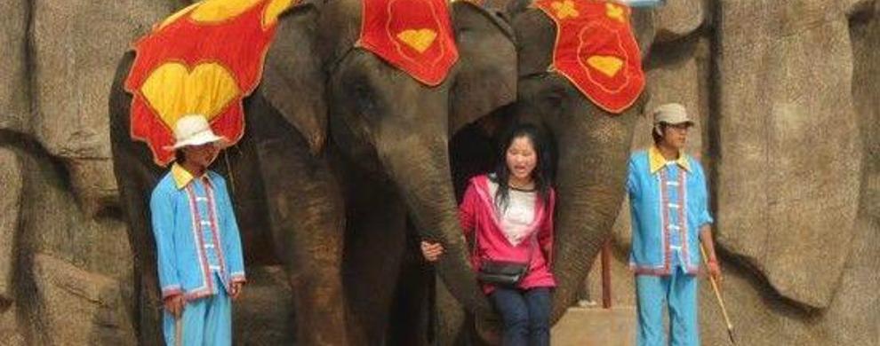 大象行为驯化
