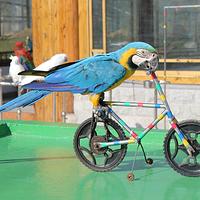 苏州穹窿山万鸟园