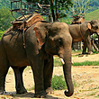 湄登大象营