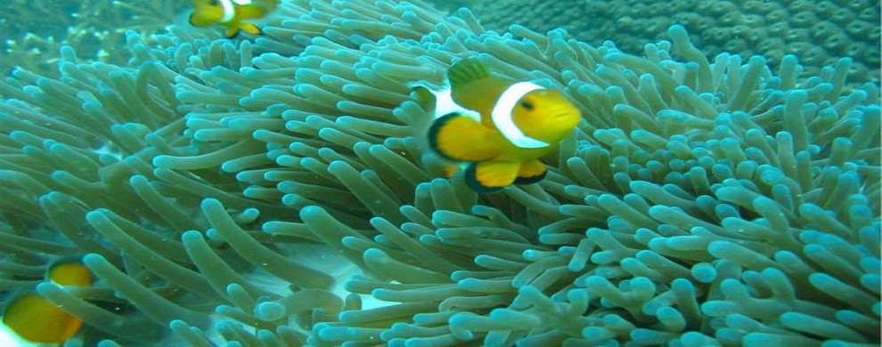 色彩缤纷的海洋生物