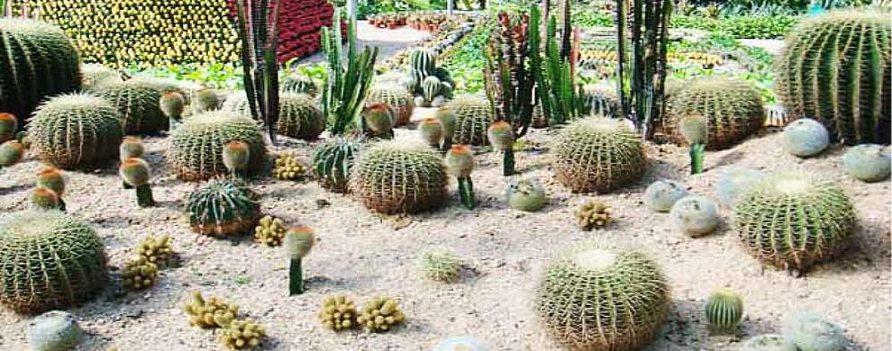 仙人植物园