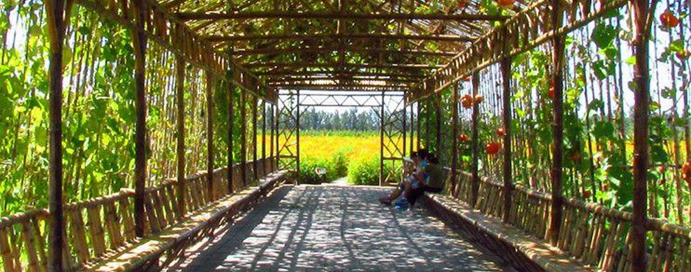 花园长廊 平面图