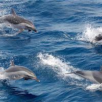奥克兰豪拉基湾观鲸观海豚游船