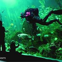 温哥华水族馆