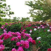 凤凰山生态植物园