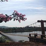 中华紫薇园