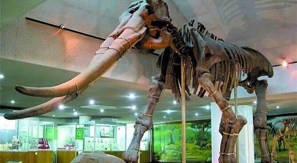 中国古动物馆恐龙蛋馆