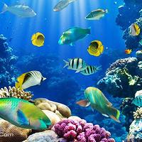 塞班岛海底漫步