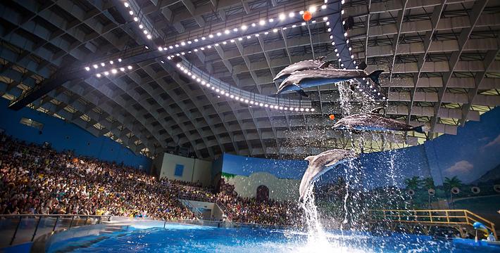 武汉市海洋公园_武汉海昌极地海洋公园门票,武汉海昌极地海洋公园门票预订,武汉