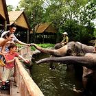 新加坡日间动物园