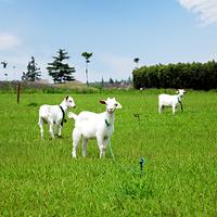 上海寻梦园香草农场景区