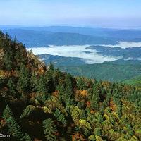 岗山国家森林公园