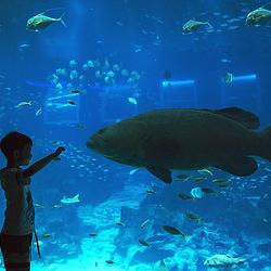 新加坡海洋生物园