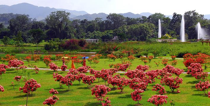 中科院西双版纳热带植物园门票,中科院西双版纳热带园