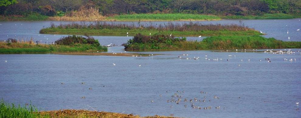 冬:观掠水候鸟
