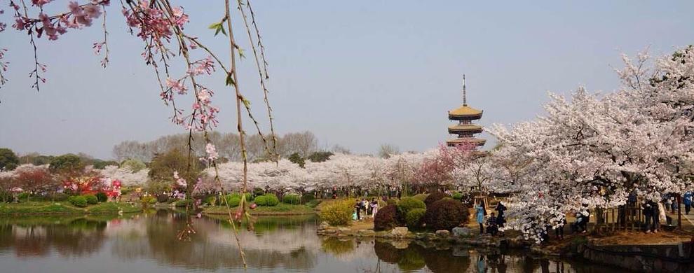 日式樱花园
