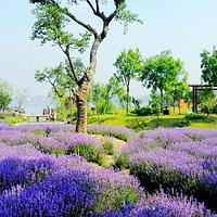 无锡鹅湖玫瑰文化园