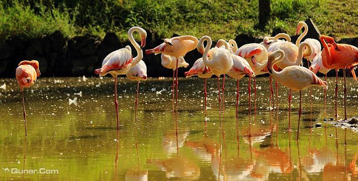 杭州野生动物园门票,杭州野生动物园门票预订,杭州园