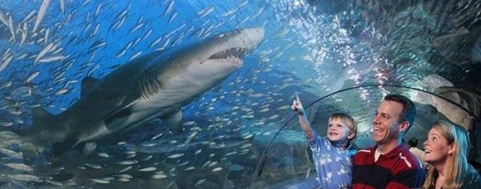 爸爸,看,鲨鱼!