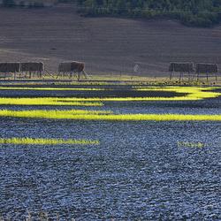 香格里拉大草原
