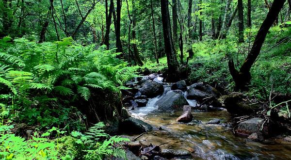 壁纸 风景 森林 桌面 600_330