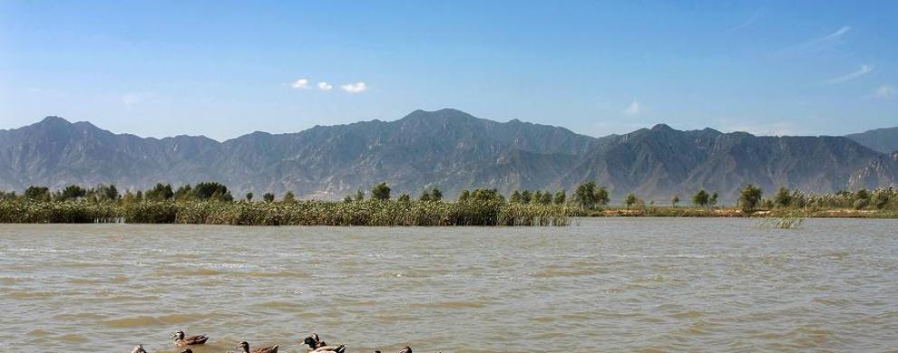 壮观的湿地生态系统