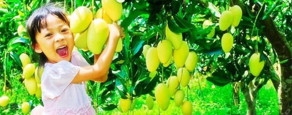 我要大芒果