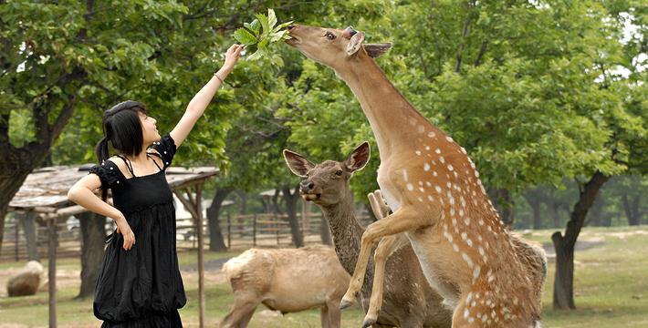 西安秦岭野生动物园是西北首家野生动物园,园内现有动物300余种,1万(头)只。动物种类由兽类、鸟类、两栖类和爬行类动物组成,种类齐全。动物展区分为车入区和步行区两大部份。步行区位于动物园的西半部,面积13万平方米,建筑面积1.6万平方米,动物馆舍包括大熊猫馆、小熊猫池、灵长馆、金丝猴馆、猴苑、火烈鸟馆、河马馆、袋鼠馆、大象馆、鹦鹉廊、白虎馆、海洋表演馆、两栖爬行馆,及鸳鸯池、雁鸭湖、水禽湿地。这里展出动物260种,8000余头(只),有国宝大熊猫、金丝猴,有海狮、海豹有产于南美洲的原驼和驼羊,产于澳洲的