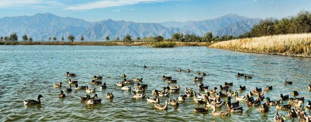 野鸭湖的烂漫