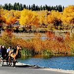 金湖杨国家森林公园