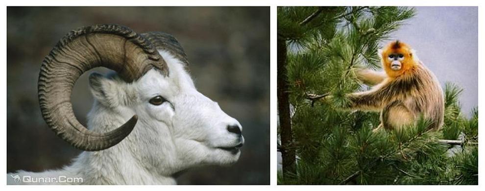 白羊自然保护区