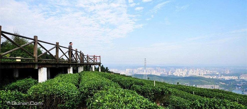 重庆永川区茶山竹海街道办事处箕山林场