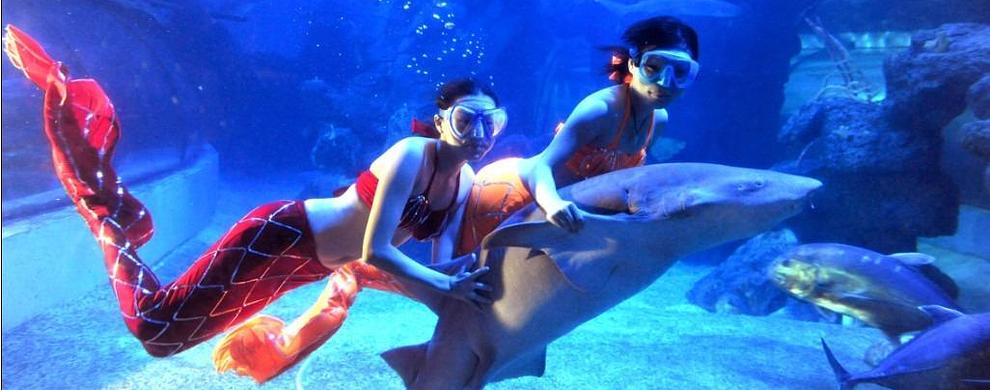 洛阳龙门海洋馆位于龙门大道西侧,南距龙门石窟2公里,北距关林庙1.5公里。占地面积11330平方米,展示面积6260平方米,全馆共分为八个主题展区,将展示300多个品种、3万余尾的世界各地珍稀的海洋淡水生物。是集观赏性、参与性、趣味性、知识性、娱乐性于一体的大型海洋公园。在这里您可以观赏到:神秘的热带雨林奇观;缤纷的珊瑚礁鱼;触手可及的海星海龟;海边红树林;沿海底隧道观光的海底花园;体形庞大的鳐鱼、小巧的七彩神仙;漂亮的珊瑚、海葵惊心动魄的人鲨共舞、美仑美奂的美人鱼、令人震撼的万鱼争食等节目每天都在海洋