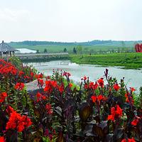 金珠花海景区