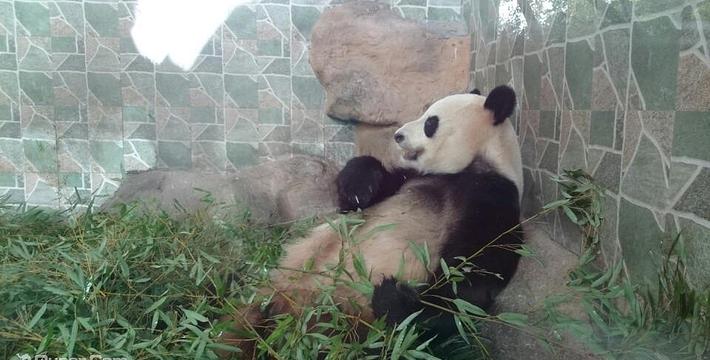(不含景区门票)温州动物园地图定位自动中文语音讲解